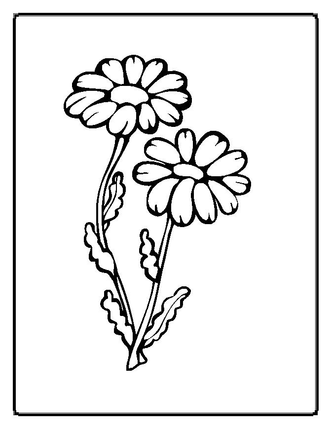 Detailed flower pattern coloring pages