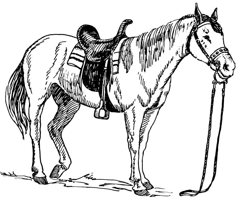 horse coloring pages 3 coloring pages to print