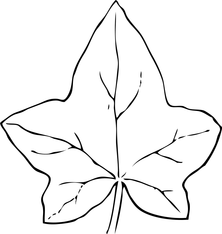 Leaf Coloring Pages 2 Coloring Pages To Print Leaf Colouring Pages