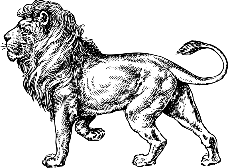 Lion sitting side drawing